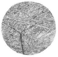 Микроструктура закаленной алюминиевой бронзы